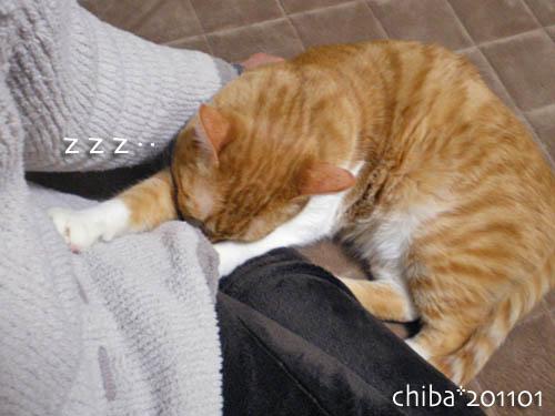 chiba11-1-132.jpg