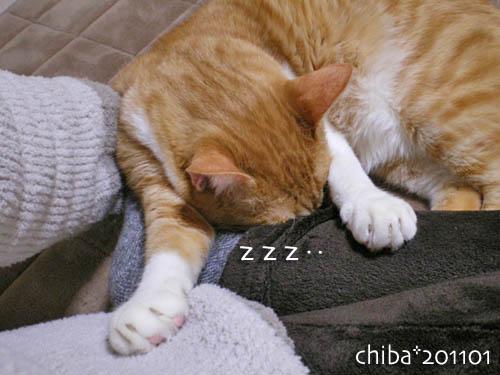 chiba11-1-137.jpg