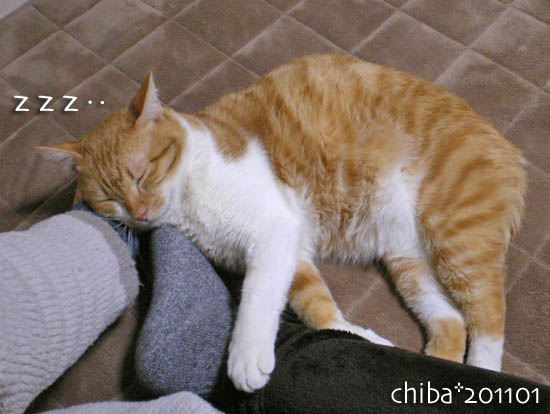 chiba11-1-138.jpg