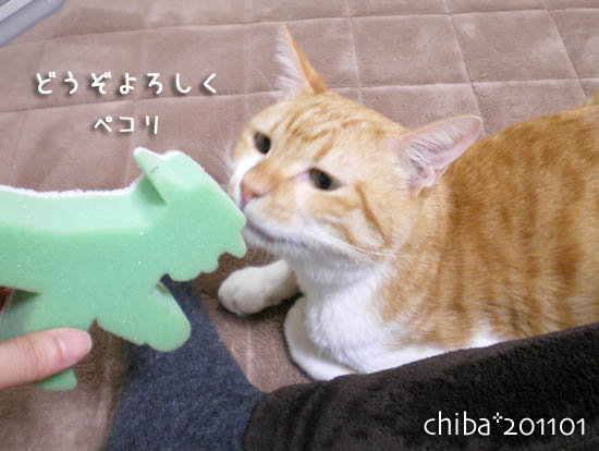 chiba11-1-160.jpg