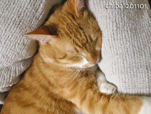 chiba11-1-176.jpg