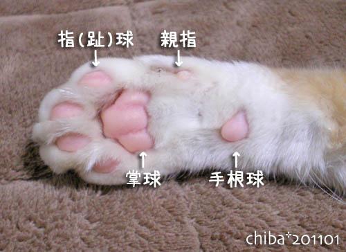 chiba11-1-199x.jpg