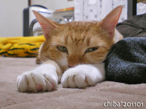 chiba11-1-210.jpg