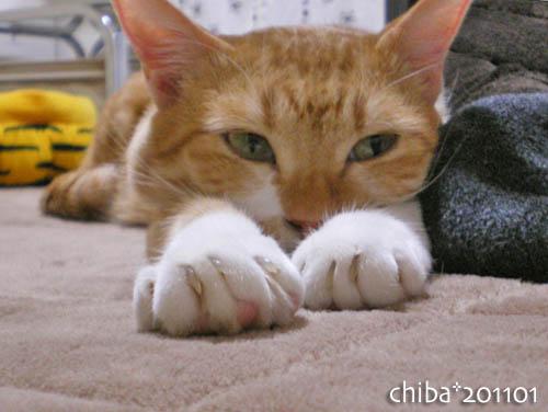 chiba11-1-211.jpg