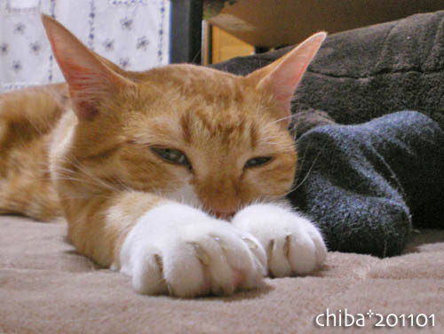 chiba11-1-213.jpg