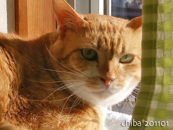 chiba11-1-234.jpg