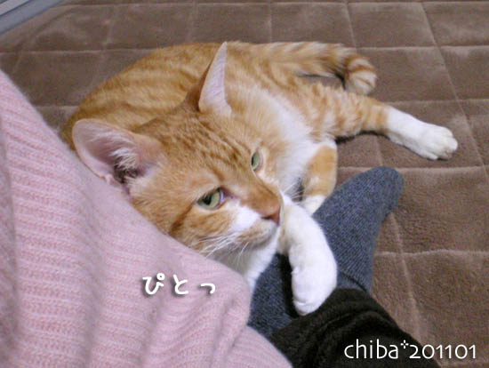 chiba11-1-255.jpg