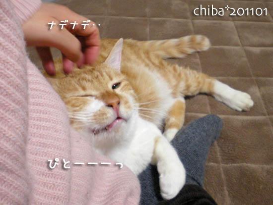 chiba11-1-256.jpg
