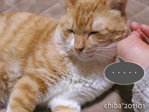 chiba11-1-35.jpg