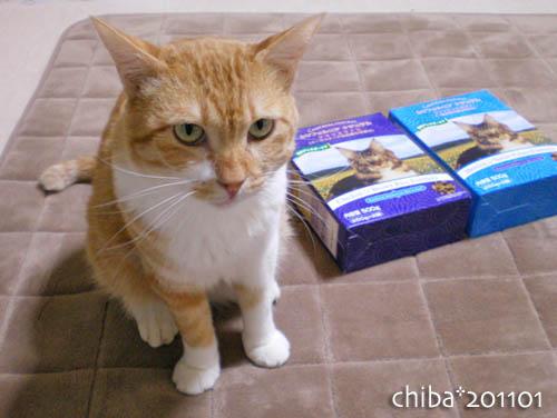 chiba11-1-47.jpg