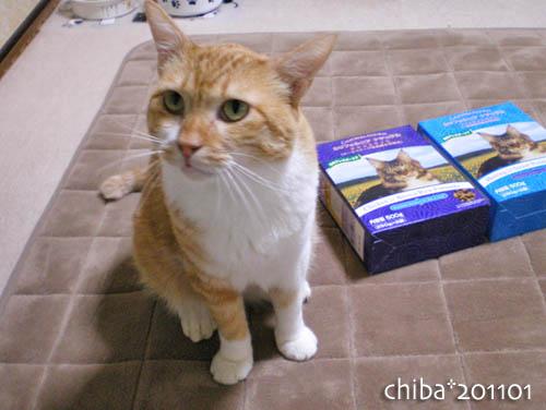 chiba11-1-48.jpg