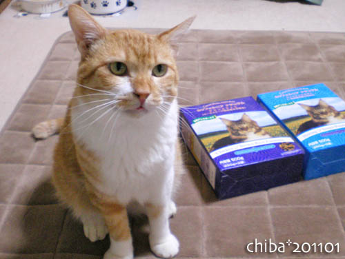 chiba11-1-50.jpg