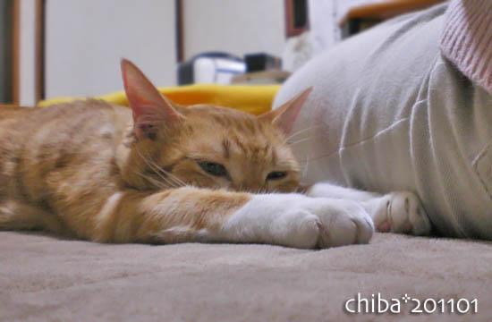 chiba11-1-56.jpg