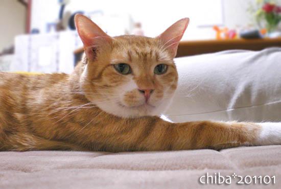 chiba11-1-59.jpg