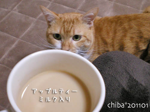 chiba11-1-63.jpg