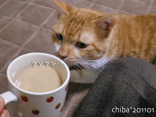 chiba11-1-64.jpg