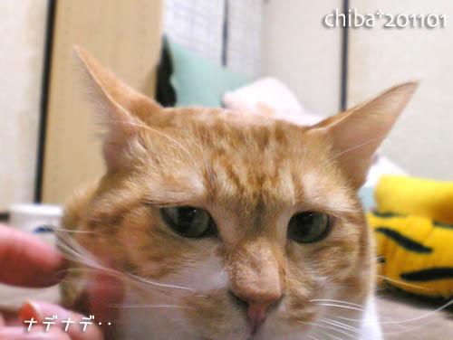 chiba11-1-70.jpg