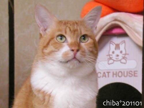 chiba11-1-76.jpg
