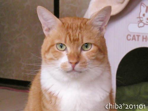 chiba11-1-79.jpg
