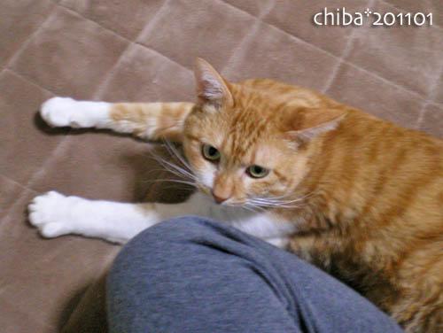 chiba11-1-81.jpg