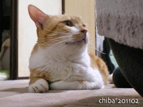 chiba11-2-108.jpg