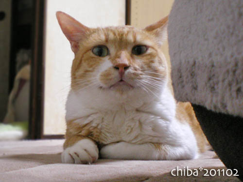 chiba11-2-110s.jpg