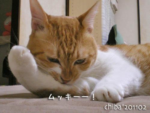 chiba11-2-120.jpg