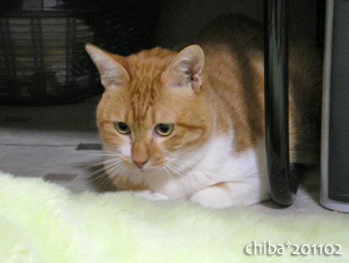 chiba11-2-126.jpg