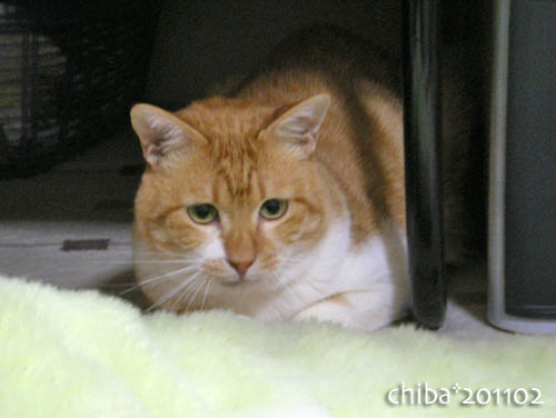 chiba11-2-127.jpg