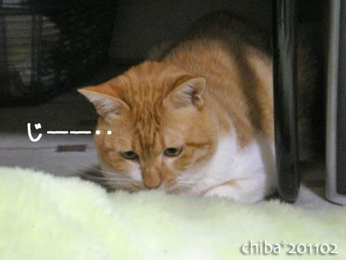 chiba11-2-130.jpg