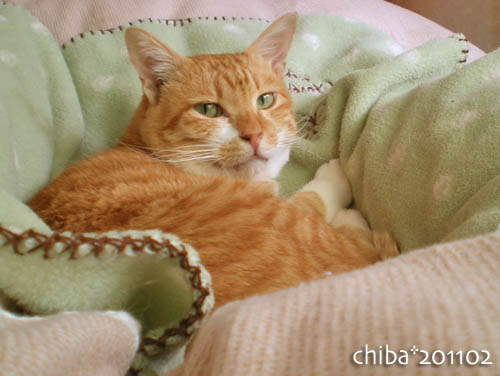 chiba11-2-141.jpg