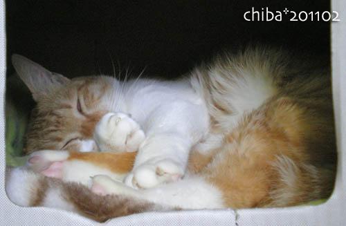chiba11-2-148.jpg