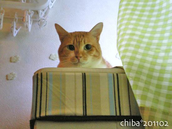 chiba11-2-149.jpg