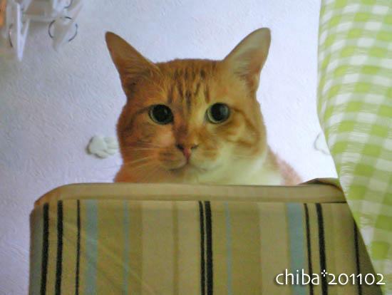 chiba11-2-150.jpg