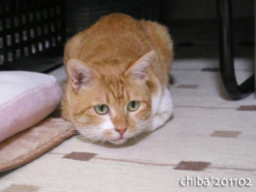 chiba11-2-168.jpg