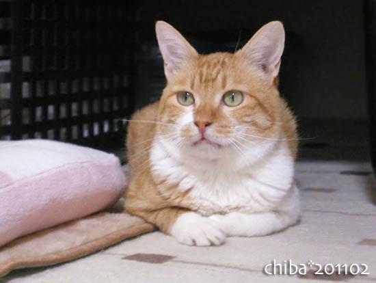 chiba11-2-174.jpg