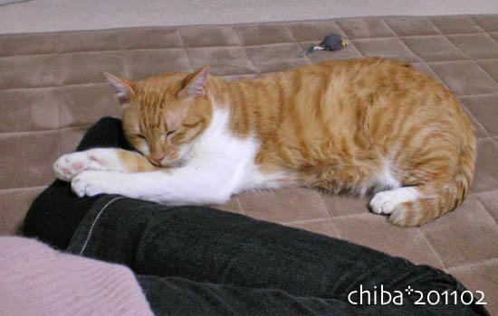 chiba11-2-6.jpg