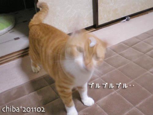 chiba11-2-82.jpg