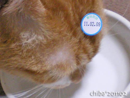 chiba11-2-84.jpg
