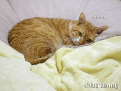 chiba11-3-10.jpg