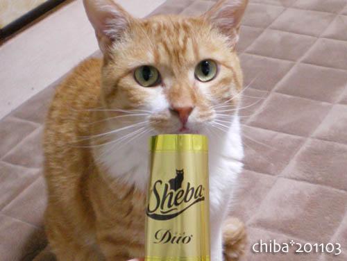 chiba11-3-101.jpg
