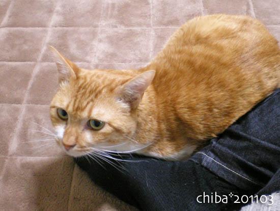 chiba11-3-102.jpg