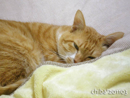 chiba11-3-11.jpg