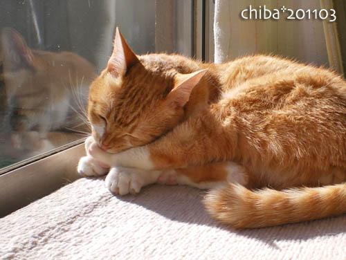 chiba11-3-112.jpg