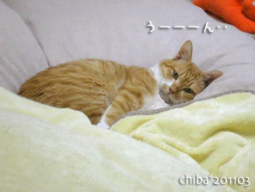 chiba11-3-13.jpg