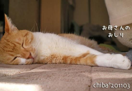 chiba11-3-133.jpg
