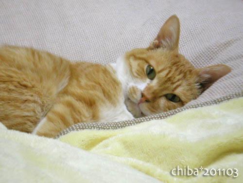 chiba11-3-14.jpg