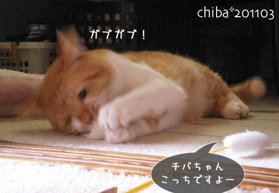 chiba11-3-141.jpg
