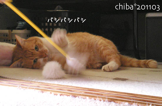 chiba11-3-143.jpg