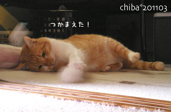 chiba11-3-144.jpg